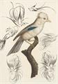Thumbnail for Penmanship Birds Free