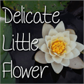 Thumbnail for Mf Delicate Little Flower