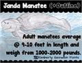 Thumbnail for Janda Manatee